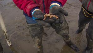 150826_oyster_shrimp_07