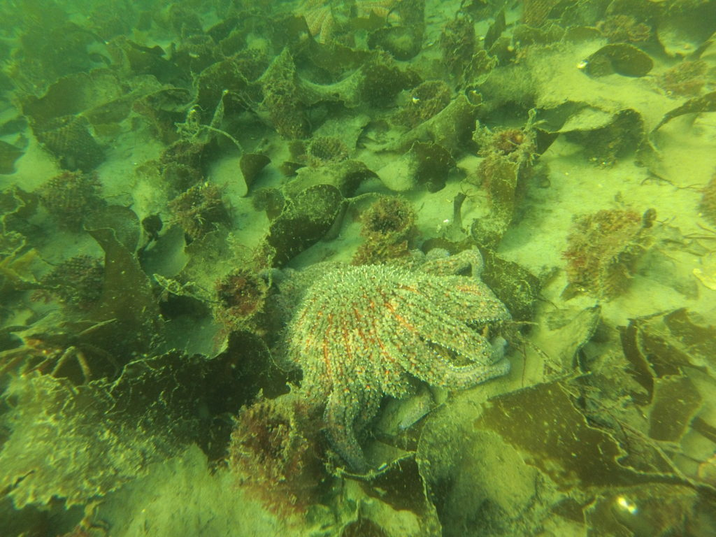 Matt's photo is of how micro-habitat amongst sleeves used for geoduck farming supports many species of macroalgae, crustaceans, echinoderms, and sponges.