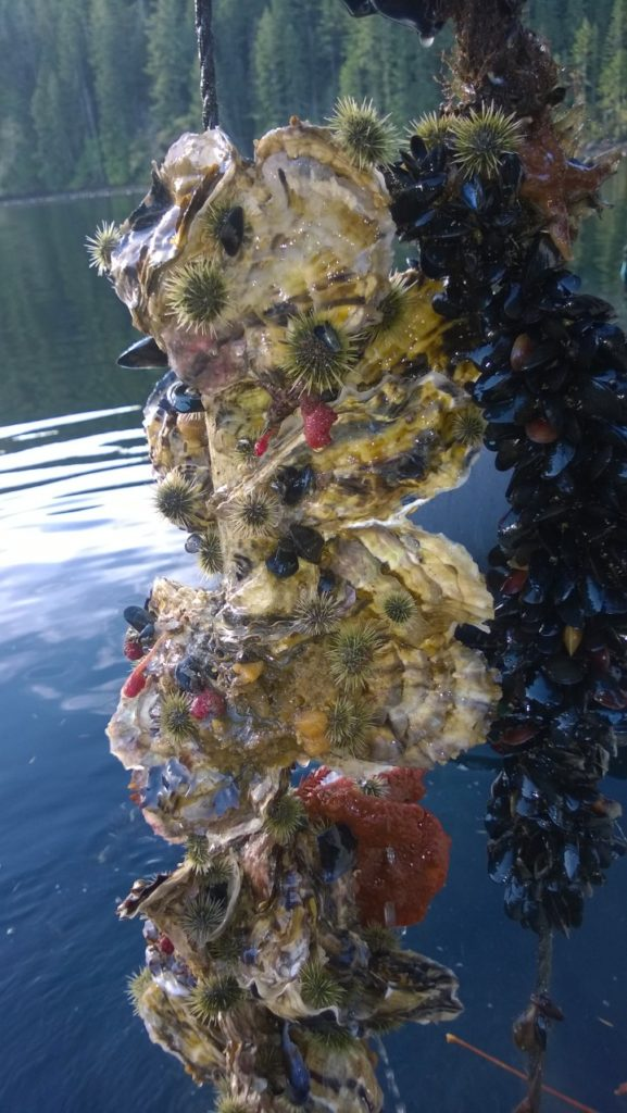 "Paul's calls his photo ""floating oyster culture."" As you can see there is quite the zoo, including sea urchins, mussels, and a variety of sponges. Photo taken in Shelton, WA."